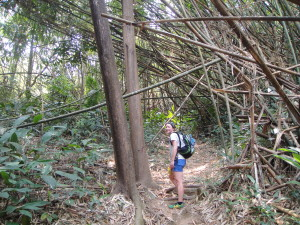 Hiking through the jungle - that's some big bamboo!