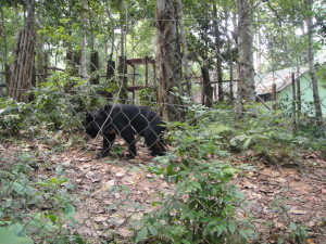Saw some cute bears - bonus!  At Kuang Si Waterfall.