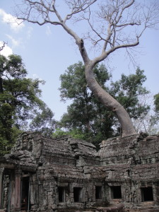 A final view of Ta Prohm.