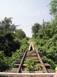 The rails of the bamboo railroad (at some points overgrown and warped).